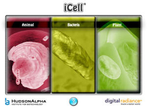 iCell1