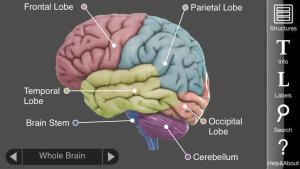 cerebro3d1