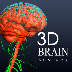 cerebro3d2